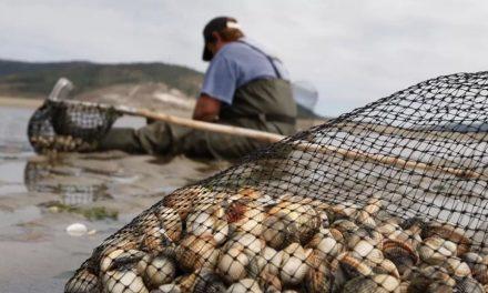 El Supremo califica como accidente laboral el sufrido por una mariscadora gallega