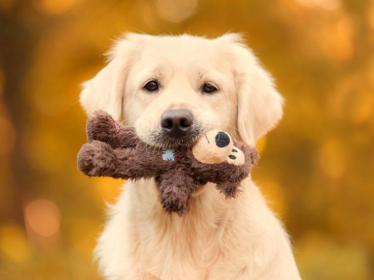 """Un juez otorga la """"custodia compartida"""" de un perro a una pareja divorciada"""