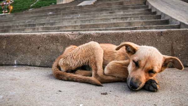 El maltrato animal: ¿pena de prisión?