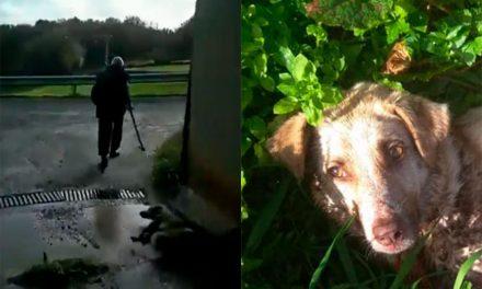 ¿Puede entrar en prisión el cazador de Chantada por haber matado a la perra Alma?
