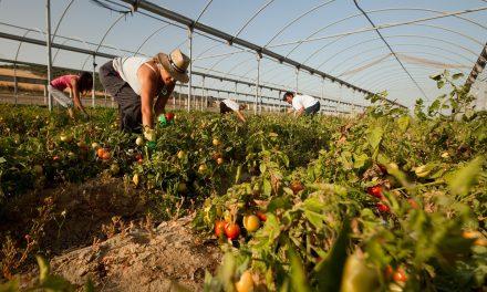 Novedades legislativas en el sector agrícola